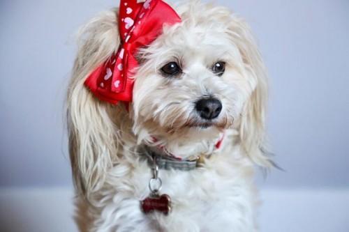 How-to-put-a-dog-tag-on-the-collar-696x464fcfb04d247ee69c1.jpg