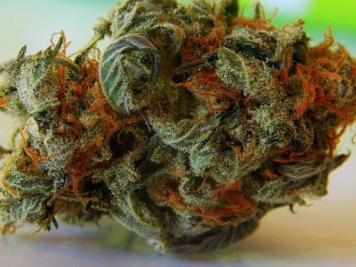 weed-759987__480122ceef7651971a0.jpg
