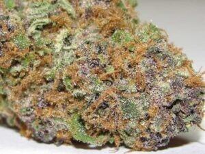 Asteroid-Marijuana-Strain48f8a8ad1a1b0101.jpg