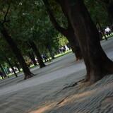 wangxing_185555a2659d916ee9