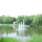 wangxing_51b83a5298fde7a0d6