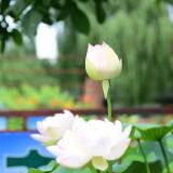 wangxing_61784992324a7ffe35