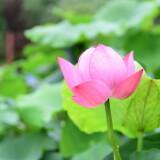 wangxing_63e008a09d450098de